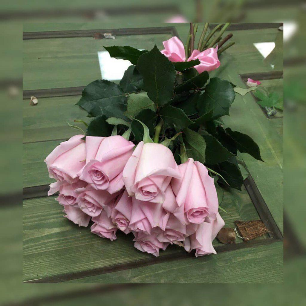 нежные розовые розы